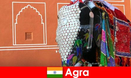 I turisti del deserto ad Agra adorano la varietà di animali