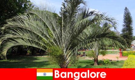 Il clima piacevole di Bangalore tutto l'anno vale un viaggio per ogni straniero
