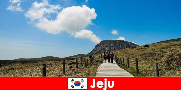 I turisti fanno un'escursione attraverso il fantastico paesaggio naturale di Jeju in Corea del Sud