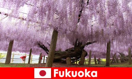 Viaggi nella natura per sconosciuti nella natura incontaminata di Fukuoka in Giappone