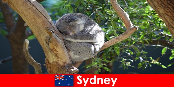 Destinazione Sydney Australia nello zoo esotico con un'esperienza notturna