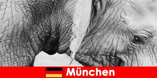 Viaggio speciale per i visitatori dello zoo più originale della Germania, Monaco di Baviera